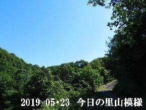 2019-05・23 今日の里山模様・・・ (5).JPG