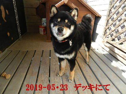 2019-05・23 今日の麻呂 (1).JPG