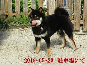 2019-05・23 今日の麻呂 (4).JPG