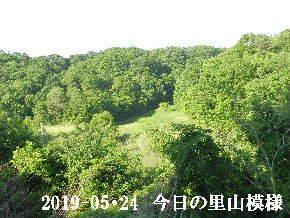 2019-05・24 今日の里山模様・・・ (2).JPG