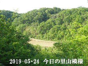 2019-05・24 今日の里山模様・・・ (3).JPG