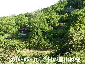 2019-05・24 今日の里山模様・・・ (5).JPG