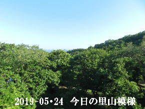 2019-05・24 今日の里山模様・・・ (6).JPG