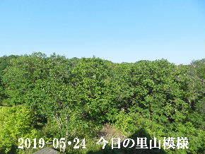 2019-05・24 今日の里山模様・・・ (7).JPG