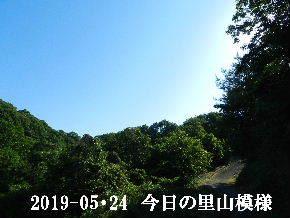 2019-05・24 今日の里山模様・・・ (8).JPG