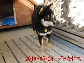2019-05・24 今日の麻呂 (5).JPG