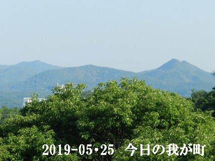 2019-05・25 今日の我が町.JPG