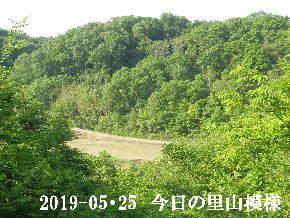 2019-05・25 今日の里山模様・・・ (3).JPG