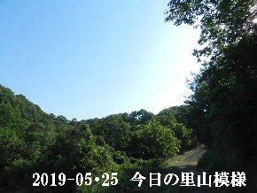 2019-05・25 今日の里山模様・・・ (5).JPG