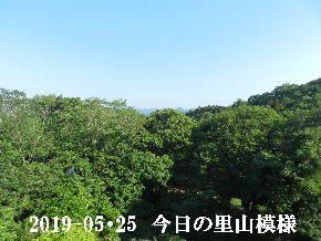 2019-05・25 今日の里山模様・・・ (6).JPG