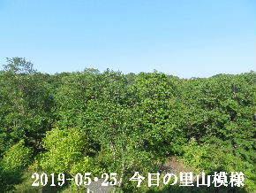 2019-05・25 今日の里山模様・・・ (7).JPG