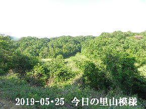 2019-05・25 今日の里山模様・・・ (8).JPG
