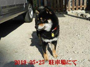 2019-05・25 今日の麻呂 (4).JPG