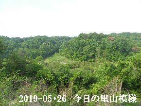 2019-05・26 今日の里山模様・・・ (3).JPG