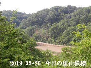 2019-05・26 今日の里山模様・・・ (4).JPG
