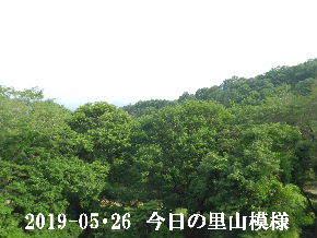 2019-05・26 今日の里山模様・・・ (7).JPG