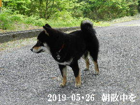 2019-05・26 今日の麻呂 (2).JPG