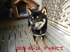 2019-05・26 今日の麻呂 (5).JPG