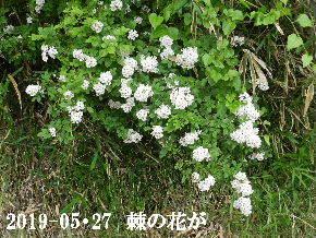 2019-05・27 今日の出遭い・・・ (1).JPG