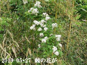 2019-05・27 今日の出遭い・・・ (2).JPG