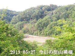 2019-05・27 今日の里山模様・・・ (3).JPG