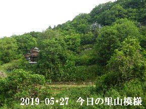 2019-05・27 今日の里山模様・・・ (4).JPG