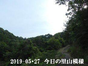 2019-05・27 今日の里山模様・・・ (5).JPG
