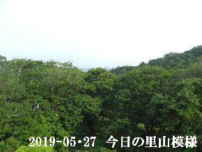 2019-05・27 今日の里山模様・・・ (6).JPG