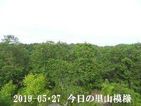 2019-05・27 今日の里山模様・・・ (7).JPG