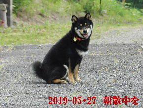 2019-05・27 今日の麻呂 (1).JPG