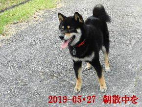 2019-05・27 今日の麻呂 (3).JPG