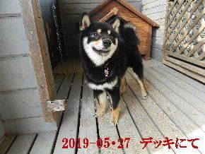 2019-05・27 今日の麻呂 (6).JPG