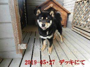 2019-05・27 今日の麻呂 (7).JPG