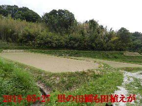 2019-05・27 里の田圃も田植えが (1).JPG