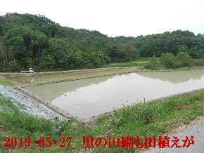 2019-05・27 里の田圃も田植えが (2).JPG