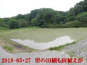 2019-05・27 里の田圃も田植えが (3).JPG