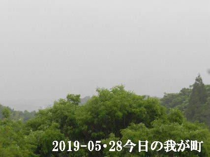 2019-05・28 今日の我が町.JPG