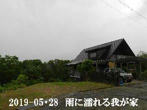 2019-05・28 今日の里山模様・・・ (1).JPG
