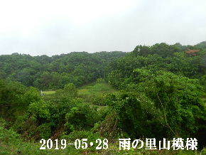2019-05・28 今日の里山模様・・・ (3).JPG