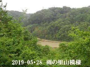 2019-05・28 今日の里山模様・・・ (4).JPG