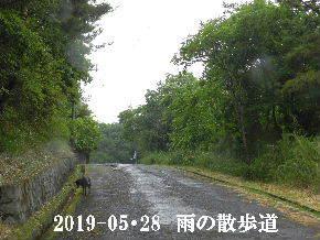 2019-05・28 今日の里山模様・・・ (5).JPG