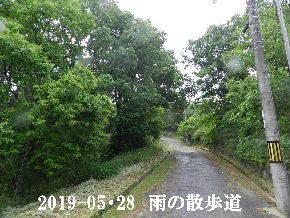 2019-05・28 今日の里山模様・・・ (6).JPG