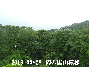 2019-05・28 今日の里山模様・・・ (7).JPG