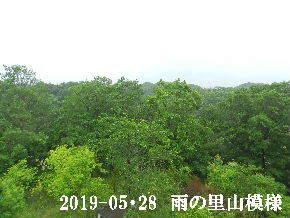 2019-05・28 今日の里山模様・・・ (8).JPG