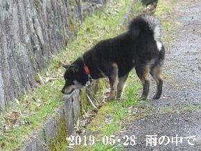 2019-05・28 今日の麻呂 (1).JPG
