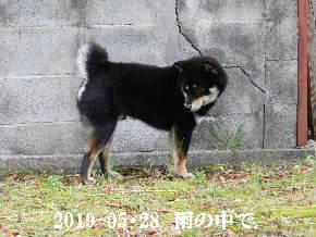 2019-05・28 今日の麻呂 (2).JPG