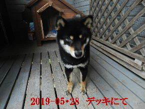 2019-05・28 今日の麻呂 (7).JPG