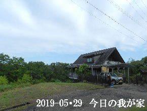 2019-05・29 今日の里山模様・・・ (1).JPG
