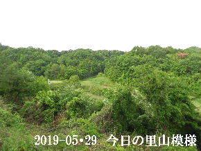 2019-05・29 今日の里山模様・・・ (3).JPG