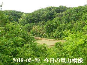 2019-05・29 今日の里山模様・・・ (4).JPG